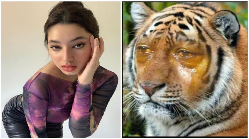Shaieda Solihin On Twitter Harimau Menangis Its Okay Harimau Malaya Http T Co Dyoy5apx